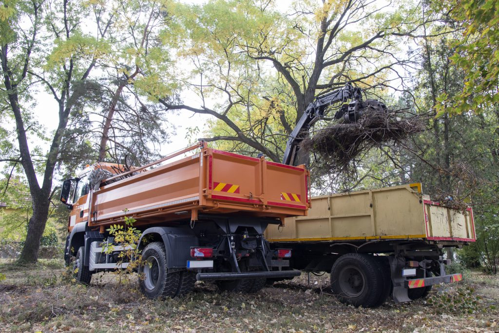 Garbage truck in the forest